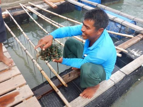 Phuket Fishing Farm